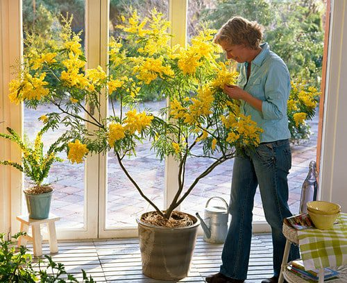enjoying a conservatory
